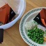 Origami Zoo – Part 1 Goldfish Winner!